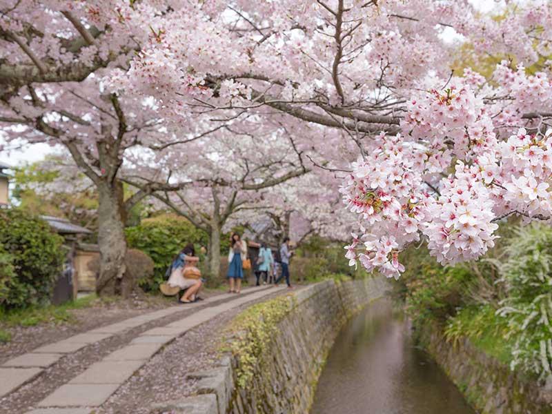 Con đường Triết gia Tetsugaku no Michi